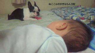 ☆わんことの生活☆